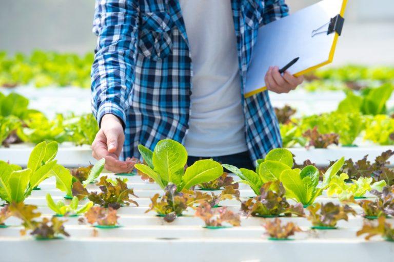 man growing vegetables