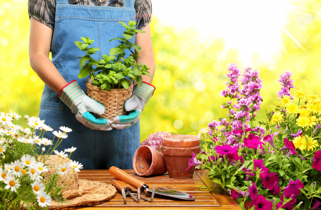 gardening materials and flowers in pots