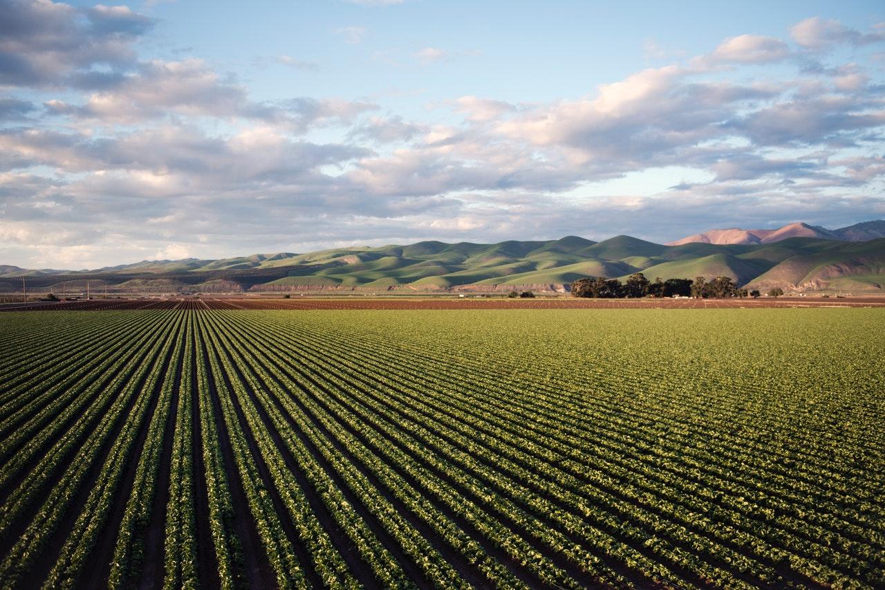 farm tilled soil