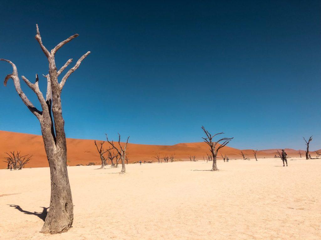 dead trees on a desert